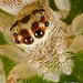 Ruby deux yeux by radio4