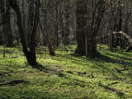 Rya skog, grön matta
