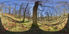 Mugdock: Mugdock Woods 7 Milngavie Scotland Equirectangular