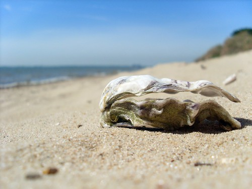 The Sand and The Oyster