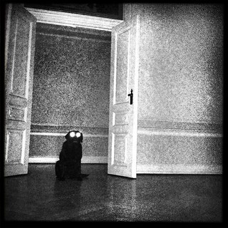 Black dog in empty room