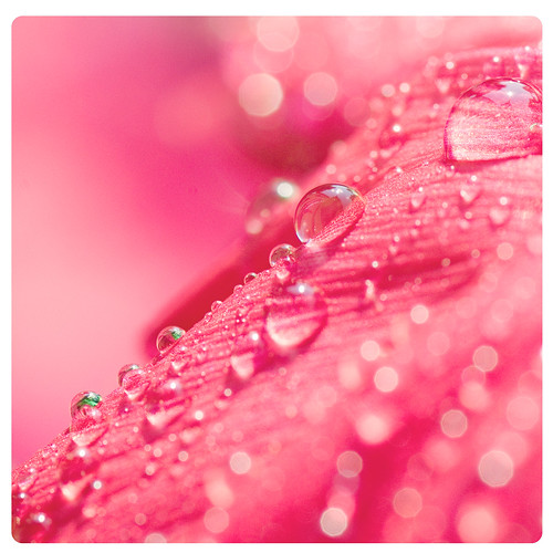 birthday pink light macro colors rain lens droplets drops dof bokeh rainy michaela rother tamaron