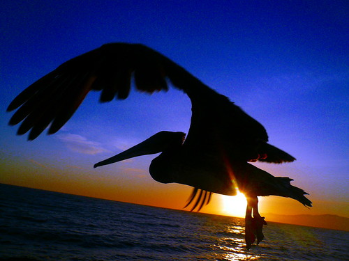 ocean sunset sun pelican platinumphoto aplusphoto grouptripod bestofmywinners