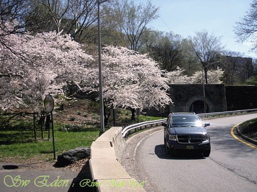 การใช้รถใช้ถนนก่อนถึง Cherry Walk