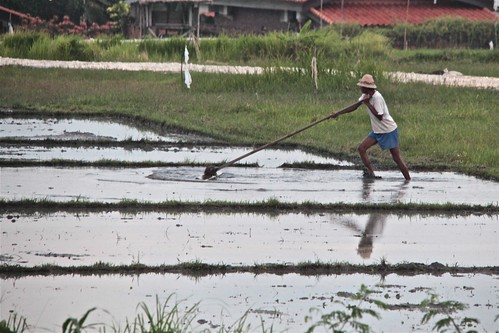 WORK ON THE RICEFIELD