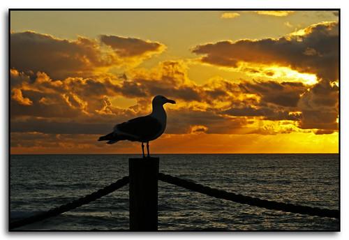 sunset clouds oregon seagull pacificocean depoebay piratecove mywinners