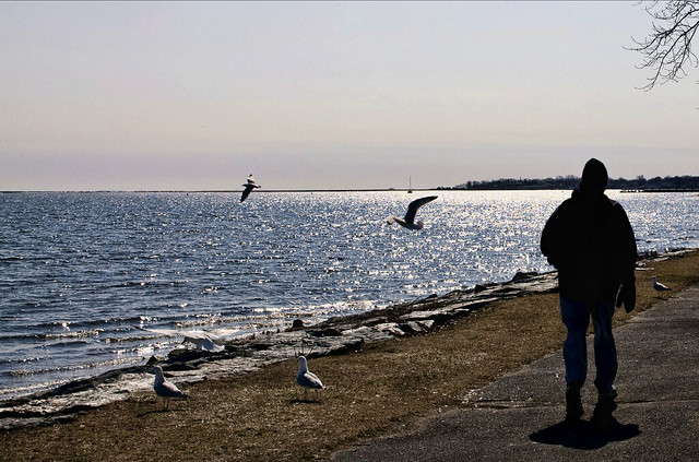 Man and Gulls