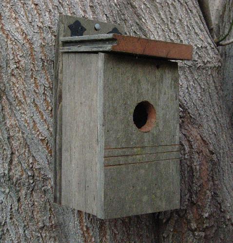 Bluebird bird house recycled barn wood 2 flickr photo - Old barn wood bird houses ...