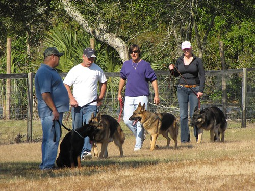 Dog Training Made Easy With These Great Tips 2