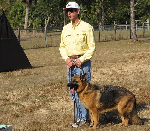 Use These Ideas For Training Your Dog. 2