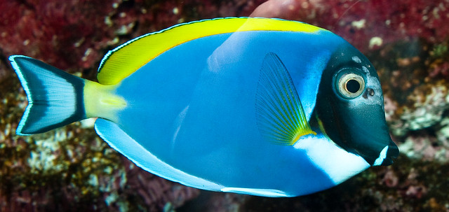 Saltwater fish starting with z aquarium fish profiles for Names for pet fish