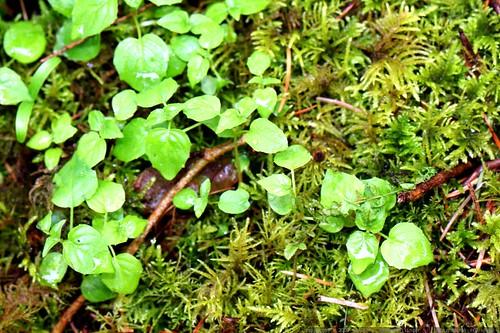 macro moss    MG 2485