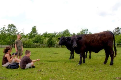 horse cow livestock fisherranch