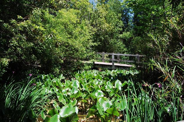North Carolina Botanical Garden Chapel Hill Tripomatic