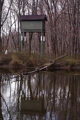 bird house reflection