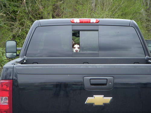 chevrolet silverado ltz rear window husky peek a photo on flickriver. Black Bedroom Furniture Sets. Home Design Ideas