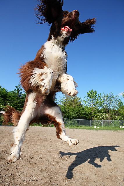Jumping Dog Shadow Flickr Photo Sharing