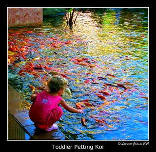 Toddler Petting Koi