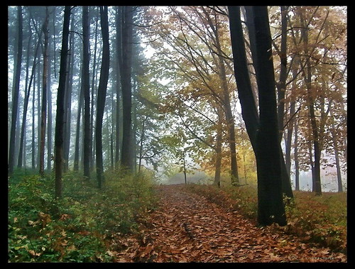 autumn mist fall nature colors forest bulgaria природа gabrovo българия mygearandme rivanova риванова