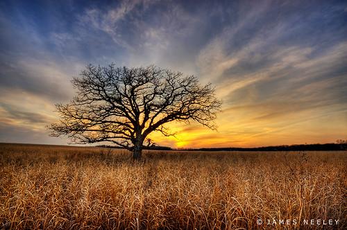 sunset minnesota landscape rochester hdr lonetree 5xp jamesneeley flickr11 eisf2009