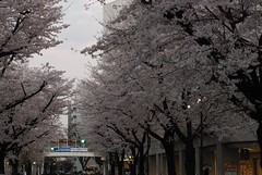 Seiseki Sakuragaoka