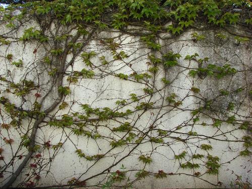 vines wall a photo on flickriver. Black Bedroom Furniture Sets. Home Design Ideas