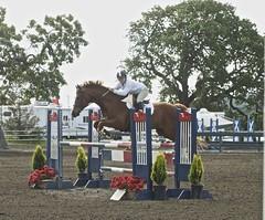 Chestnut Jumper