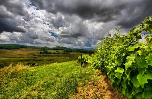 storm clouds cloudy country pisa campagna tuscany toscana sole uva pioggia vino vite vendemmia temporale palaia nuvoloso raccolta piovoso