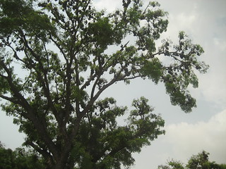 bats tree