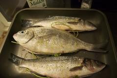 trout(0.0), perch(0.0), cod(0.0), japanese amberjack(0.0), milkfish(0.0), animal(1.0), bass(1.0), fish(1.0), fish(1.0), food(1.0), barramundi(1.0),