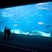 Atlanta Aquarium (The OMG Window)
