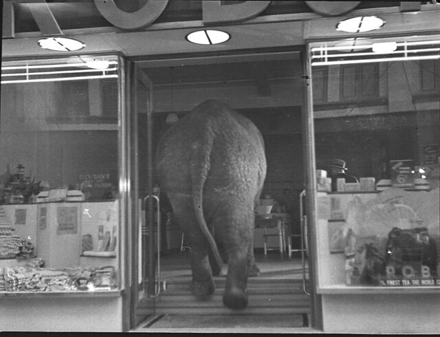 Elephant's tea party, Robur Tea Room, Sydney, 24 March 1939 / Sam Hood