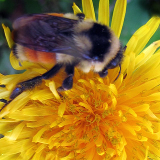 bee loved   Deanna Cremin Memorial Foundation