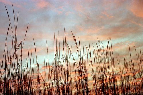 morning film grass silhouette sunrise landscape dawn silhouettes negative punjab canonet amritsar kodacolor c41 elephantgrass gold100 rajasansi abigfave impressedbeauty goldstaraward bstpics bstpicspub bstcan