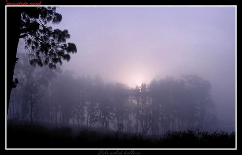 morning india love nature fog rural forest sunrise indian traditional vizag araku villagescene andhrapradesh yourphototips andharapradesh