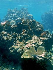 Caracol Barrier Reef