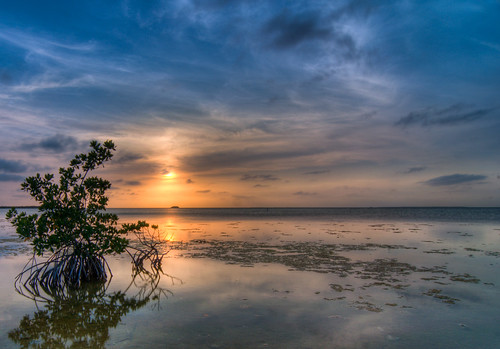 Mangrove Sunset