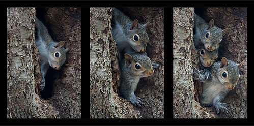 family tree squirrel north carolina triptyk waxhawnc mywinners canecreekpark concordians ghholt squirrelfamilytriptyk storybookwinner storybookttwwinner