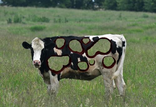 Cow Art 3