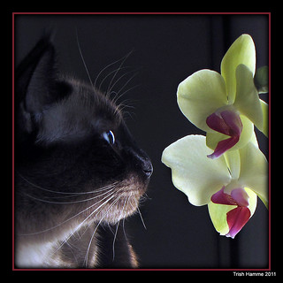 Miss Truffles meets Orchid [ Explored ]