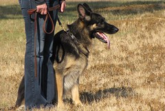 Tips On How To Successfully Train Your Dog 2