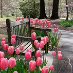 Garden Reverie