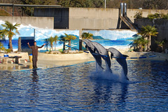 Dolphin show at the Madrid zoo