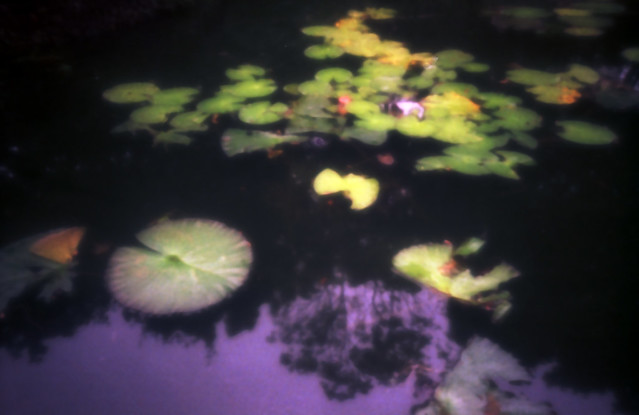 lilly pond - zone sieve impressionist