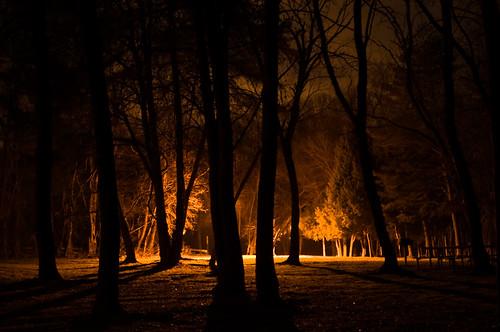 light orange tree dark d300