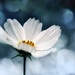 If we could see the miracle of a single flower clearly, our whole life would change. by Quadvision [Bokeh Dreaming]