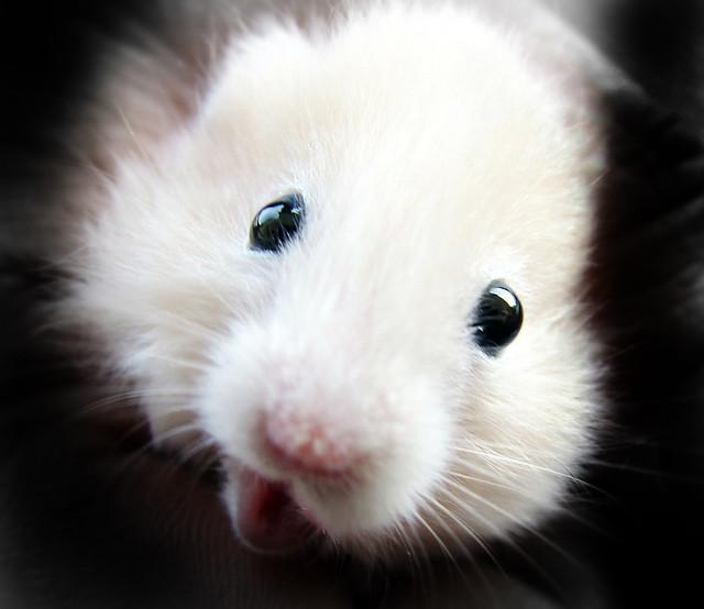 MY Hamster ( zeytin ) Explore He Died :(..