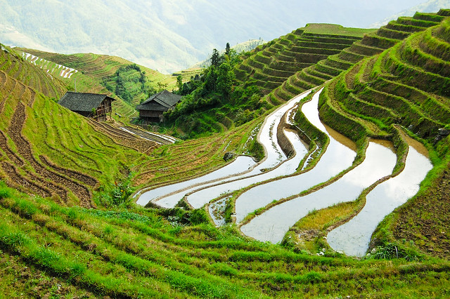 Rice terraces a gallery on flickr for Terrace farming