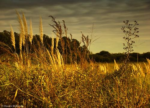 light sunset naturaleza sun color luz nature clouds landscape atardecer peace searchthebest artistic miracle sony paisaje queen chapeau fields topf150 soe dsc campos pampa splendid tlc twop h9 bellisima gpc thecitadel topshots imagepoetry bej abigfave worldbest anawesomeshot aplusphoto ultimateshot theunforgettablepictures overtheexcellence platinumheartaward fleursetnature goldsealofquality betterthangood theperfectphotographer sirhenryandco landscapesdreams multimegashot goldcruzadas magicdonkeysbest earthmarvels50earthfaves claudioar claudiomufarrege panoramafotográfico goldenart naturescreations phvalue dragondaggeraward artofimages saariysqualitypictures imagesforthelittelprince musicsbest worldsartgallery redmatrix absolutelyperrrfect bestcapturesaoi oracosm oracope oracobb flickrunitedaward magicunicornverybest freddymercuryisntdead sailsevenseas