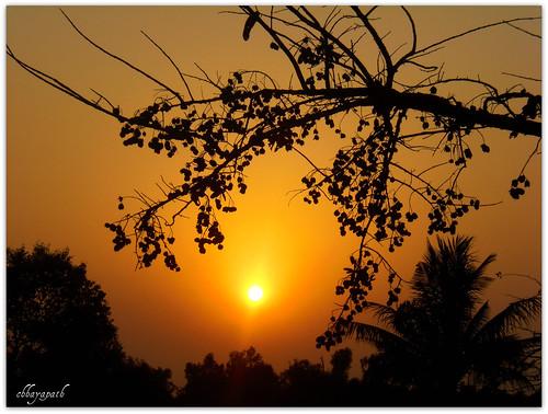 light sunset sky sun tree leaves silhouette forest dark gold golden leaf ray branch shine darkness time horizon jungle memory end moment bangladesh bangla cherish sundarbans chhayapath